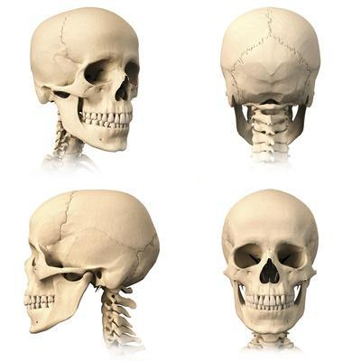 https://imgc.allpostersimages.com/img/posters/anatomy-of-human-skull-from-different-angles_u-L-PN8WV00.jpg?p=0