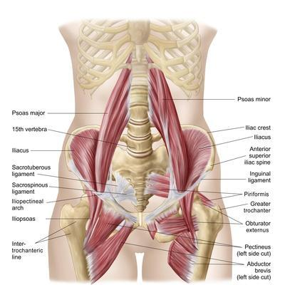 https://imgc.allpostersimages.com/img/posters/anatomy-of-iliopsoa-also-known-as-the-dorsal-hip-muscles_u-L-PN8IH20.jpg?p=0