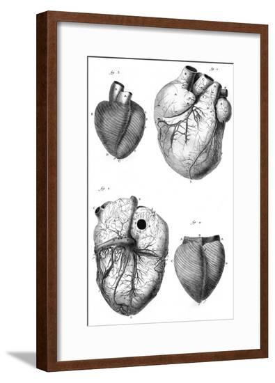 Anatomy of the Heart--Framed Giclee Print