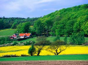 Rape Fields and Forests Surrounding Farm House on Kulla Peninsula, Skane, Sweden by Anders Blomqvist