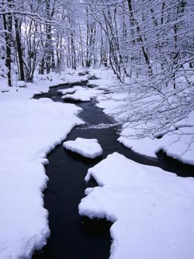 Snow Almost Covering Skaran Creek, Sodersen National Park, Skane, Sweden by Anders Blomqvist