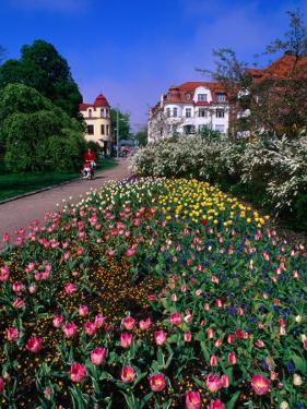 Spring Flowers in Angelholm City Park, Angelholm, Skane, Sweden by Anders Blomqvist