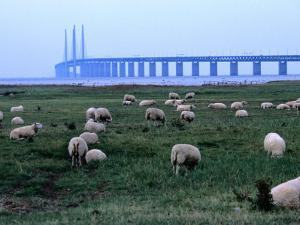 The New Oresund Bridge Between Malmo and Copenhagen from Bunkeflostrand, Malmo, Skane, Sweden by Anders Blomqvist