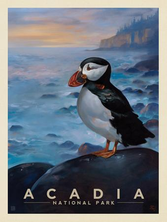 Acadia National Park: Puffin by Anderson Design Group