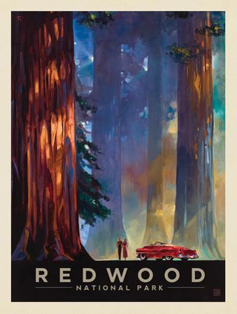 Redwood National Park: Among The Giants by Anderson Design Group