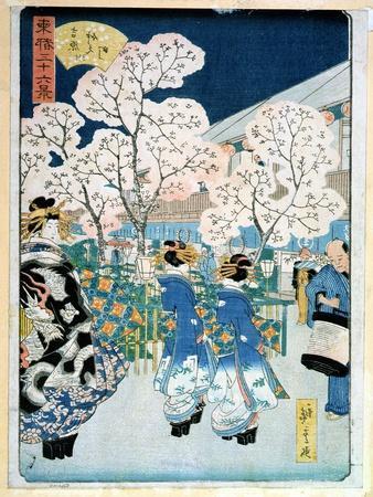 Cherry Blossom at Asakura