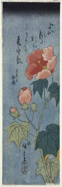 Flowering Poppies, Tanzaku by Ando Hiroshige