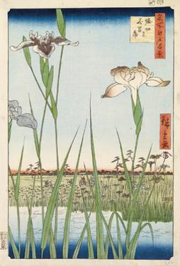 Irises at Horikiri, 1857 by Ando Hiroshige