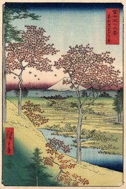 Japan: Maple Trees, 1858 by Ando Hiroshige