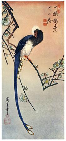 Long Tailed Blue Bird on Branch of Plum Tree in Blossom, 19th Century