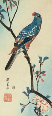 Parrot on a Branch by Ando Hiroshige
