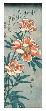 Peonies by Ando Hiroshige