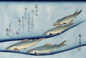 Rivertrout', from the Series 'Collection of Fish' by Ando Hiroshige