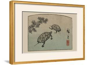 Turtles (Kame) by Ando Hiroshige