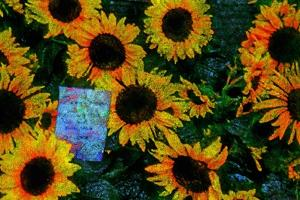 Sunflowers by Andr? Burian