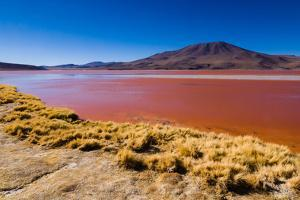 Laguna Colorada by Andras Jancsik