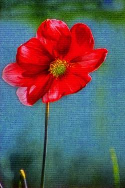 Red Flower by André Burian