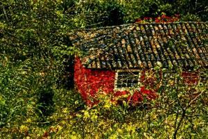 Red House by André Burian