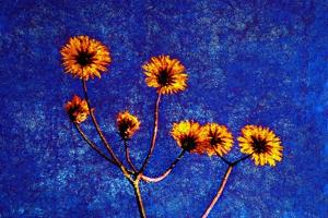 Yellow and Blue by André Burian