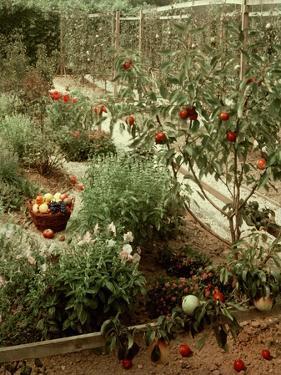 House & Garden - January 1956 by André Kertész
