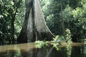 Brazil Flooded Forest, Amazon by Andrea Florence