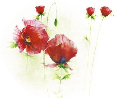 Red Poppies I by Andrea Fontana