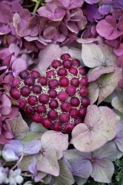 Berry Heart on Hydrangea Blossoms by Andrea Haase