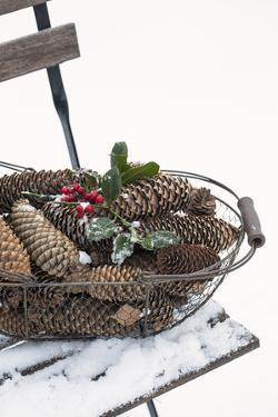 Chair in the Snow, Basket with Plug and Holly by Andrea Haase