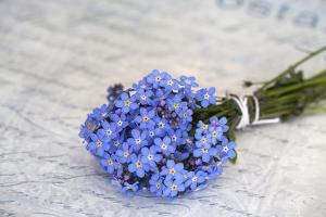 Forget-Me-Not, Bunch by Andrea Haase