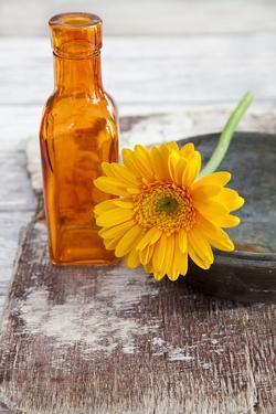 Gerbera, Flower, Orange, Glass Bottle by Andrea Haase