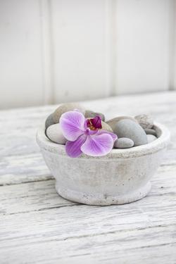 Orchid Flower, Shell, Pebbles by Andrea Haase
