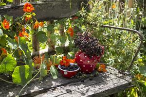 Spotted Dishes with Berries and Blossoms on Old Garden Bench by Andrea Haase