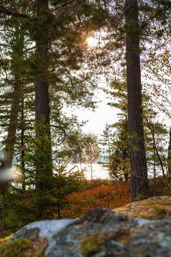 Vegetation, shore, lake, Lelång, Dalsland, Sweden by Andrea Lang