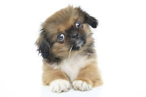 Puppies 051 by Andrea Mascitti