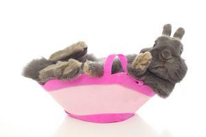 Rabbits 004 by Andrea Mascitti