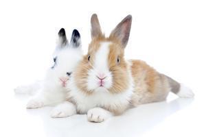 Rabbits 006 by Andrea Mascitti