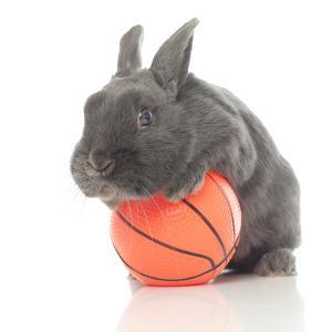 Rabbits 015 by Andrea Mascitti
