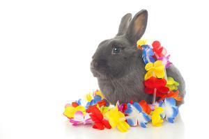 Rabbits 019 by Andrea Mascitti