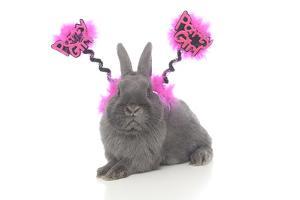 Rabbits 020 by Andrea Mascitti