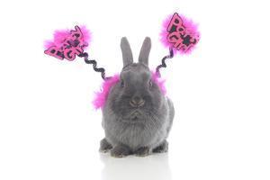 Rabbits 021 by Andrea Mascitti