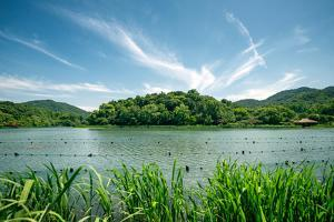 Green Landscape with Lake and Lush Hills in Hangzhou, Zhejiang, China by Andreas Brandl