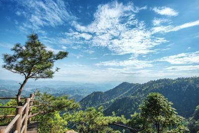 Pine Tree and Green Mountains at Tian Mu Shan Four Sides Peak, Zhejiang, China