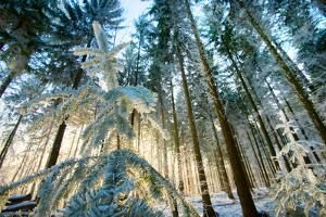 Setting Sun Illuminating the Frozen Forest of Koenigstuhl Mountain (Kings Chair) by Andreas Brandl
