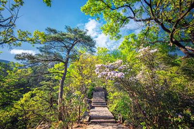 Stone Steps Leading into the Lush Natural Environment with Trees and Blossoms of Tian Mu Shan