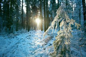 The Sun Finding a Small Opening in the Snowy Forest of Koenigstuhl by Andreas Brandl