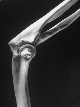 Skeletal Structures of an Elbow, Showing Joint by Andreas Feininger