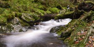 Belgium, High Fens, Hautes Fagnes, Nature Reserve High Fens-Eifel, Tros Marets Brook by Andreas Keil