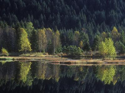 France, Vosges Mountains, Lac Du Lispach in Autumn
