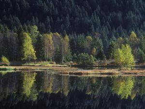 France, Vosges Mountains, Lac Du Lispach in Autumn by Andreas Keil
