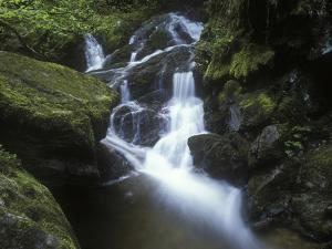 Germany, Baden-WŸrttemberg, Black Forest, Wutach Gorge, Lotenbach Ravine, Waterfall with Moss by Andreas Keil